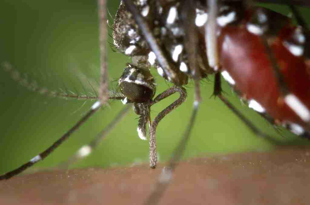 sintomas dengue