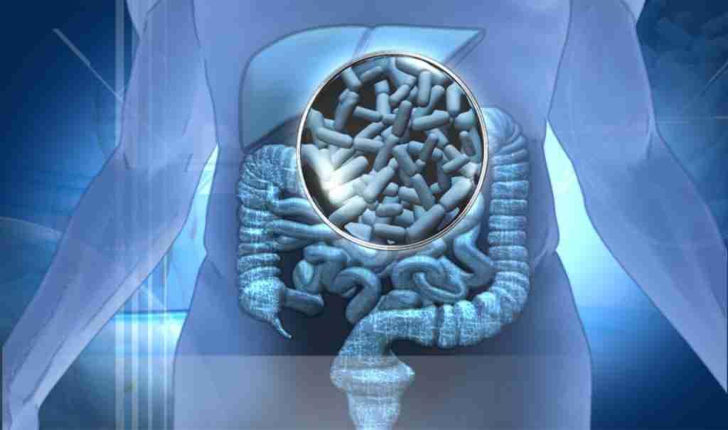 probióticos intestino